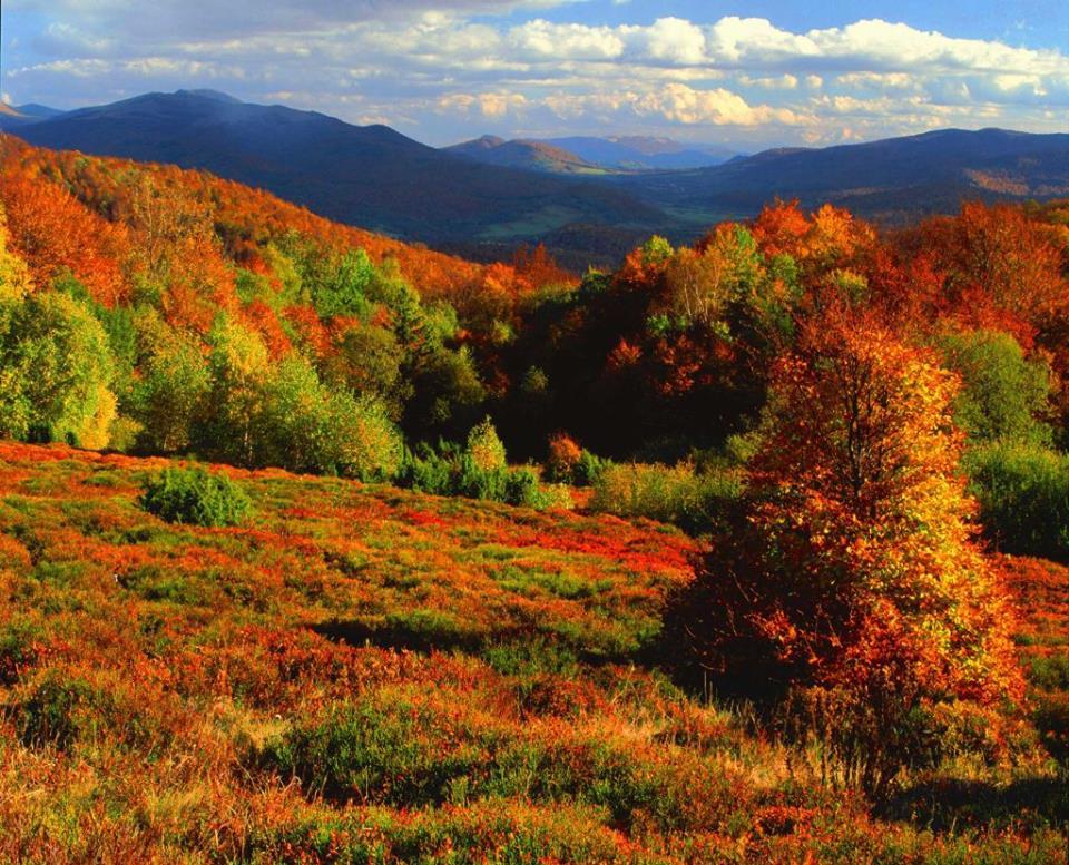 Краса осені