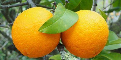 Ода апельсину