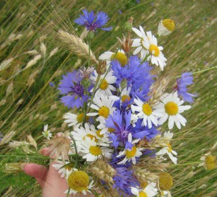 Букет польових квітів