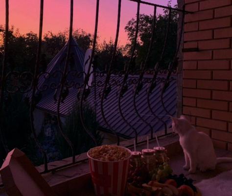 Котик на балконі дивится на захід сонця