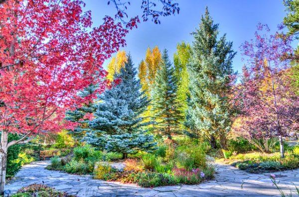 Сад, дерева